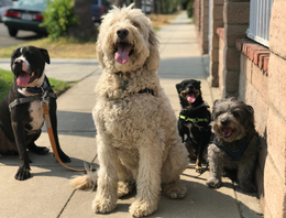 DOGS ON SIDWALK