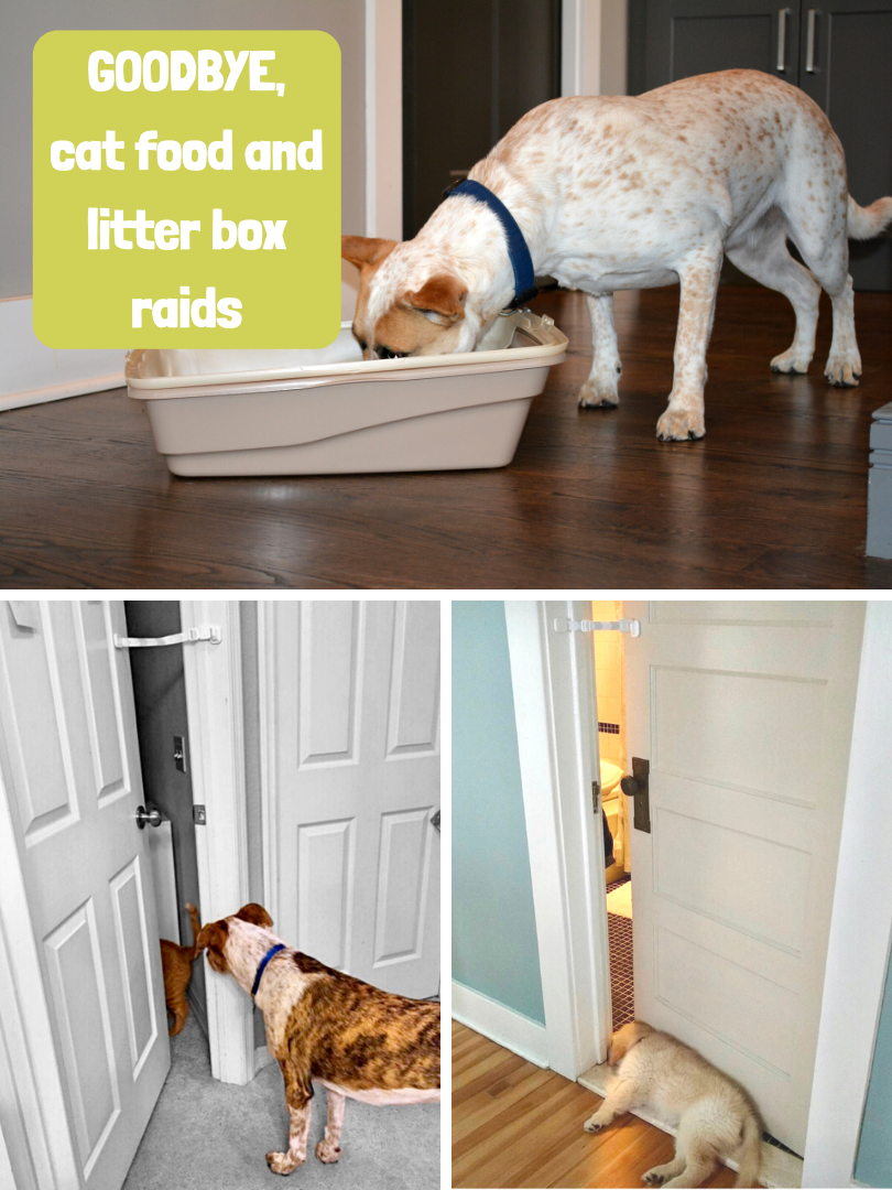Dog proof litter box with Door Buddy