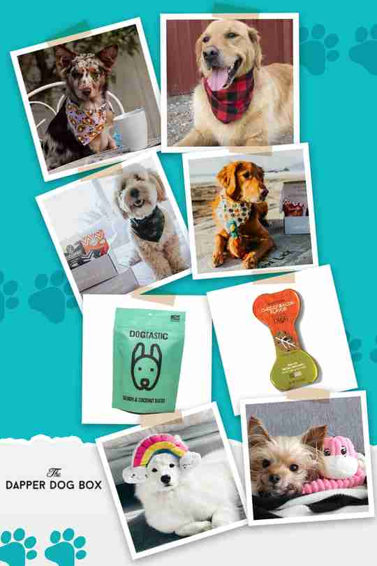 The Dapper Dog toys, treats, and gifts