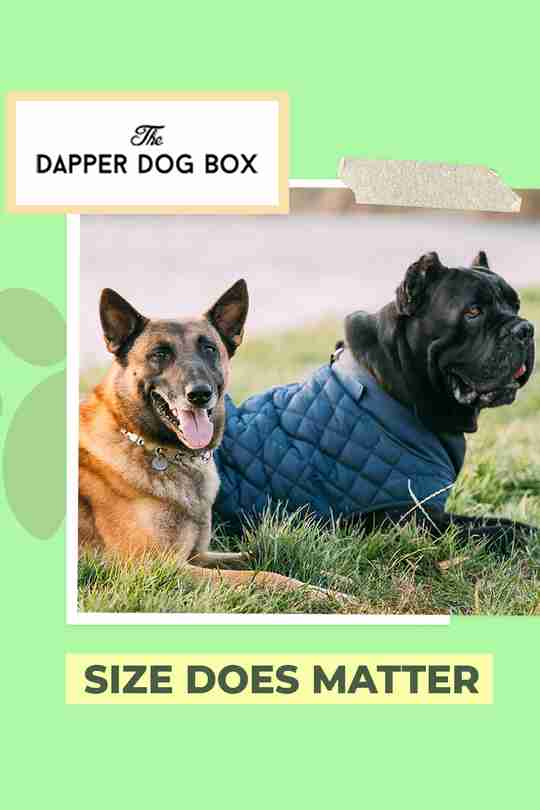best watchdog breeds