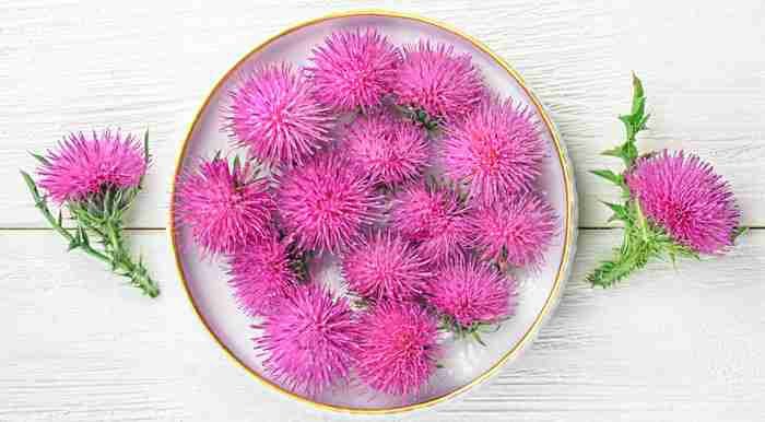 Milk Thistle flowers in white with one milk thistle flower on each side of the bowl