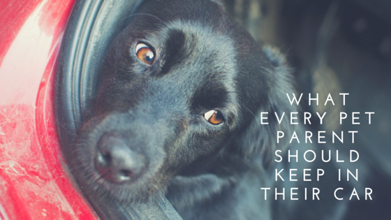 What Every Pet Parent Should Keep in Their Car