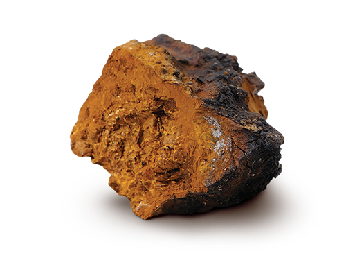 The Top 5 Benefits of Chaga Mushroom for Your Skin