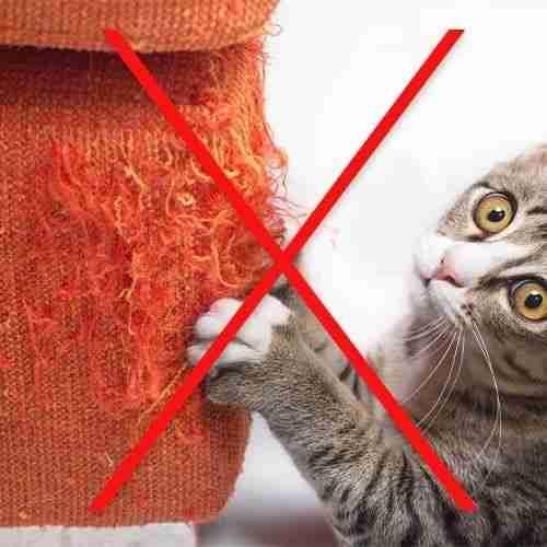 Prevent cat scratching furniture