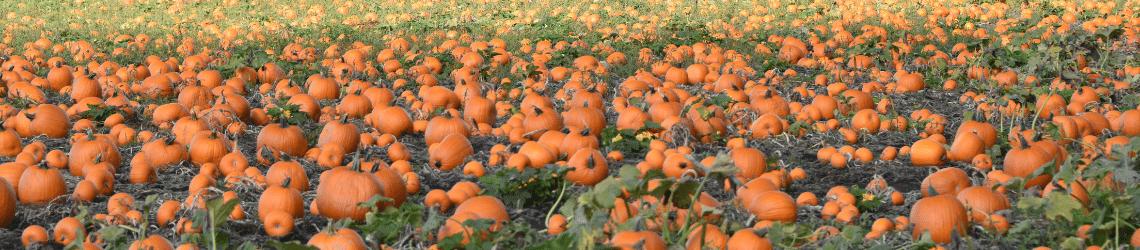 Teraganix coyote canyon farms pumpkin case study ag-1000