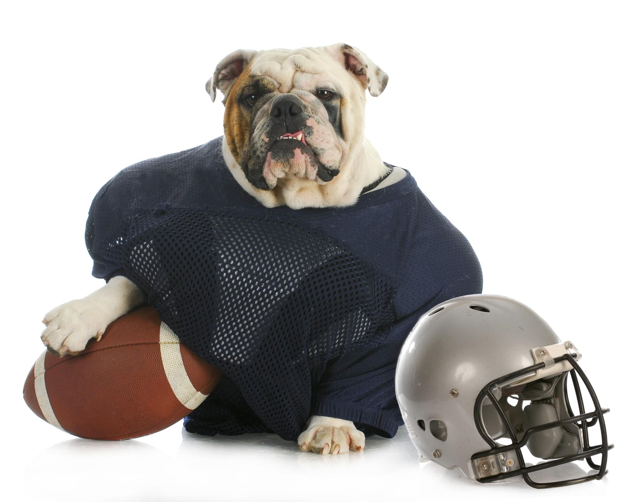 A Puppy Bowl Participant
