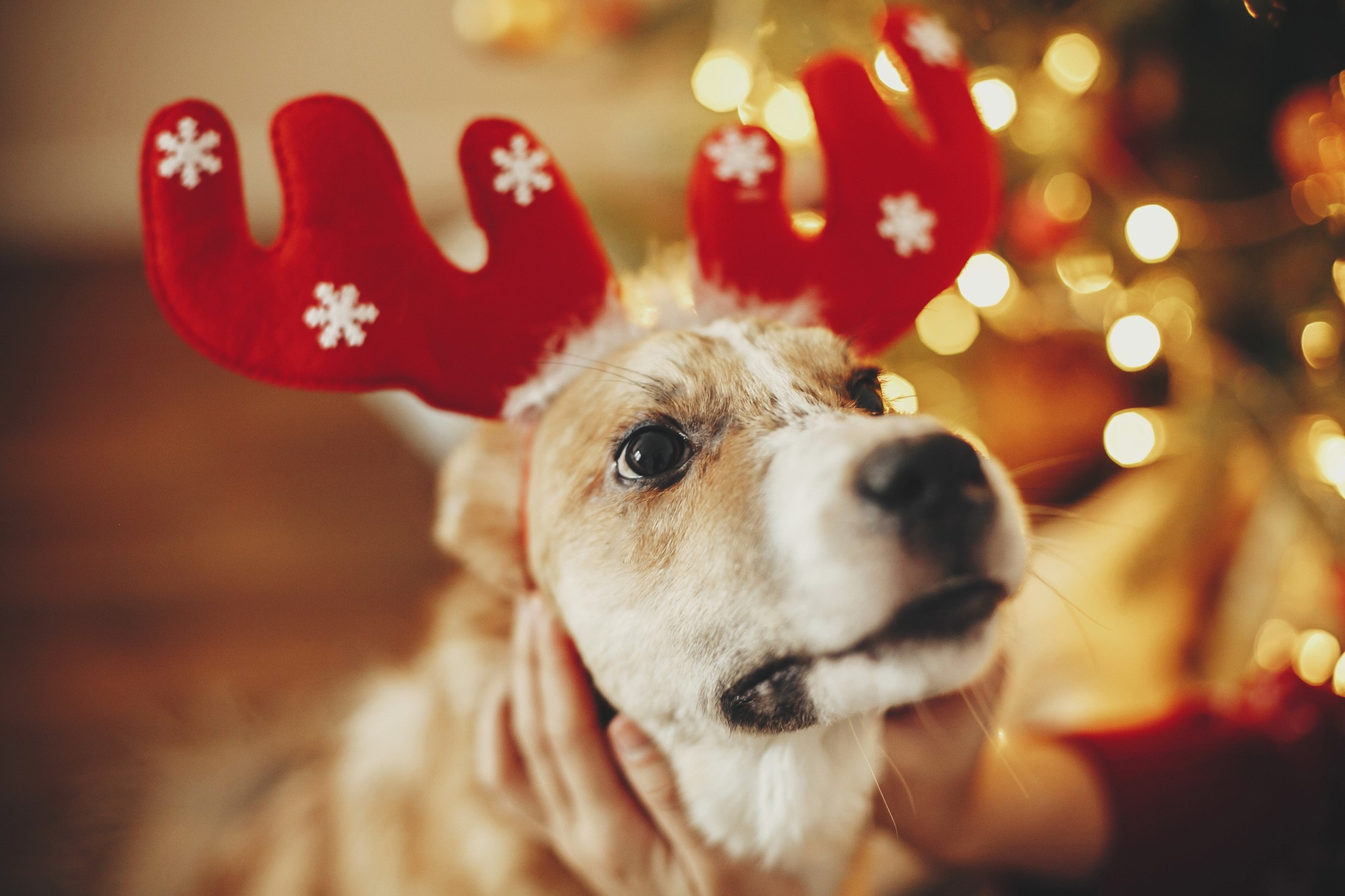 7 Tips to Help You Celebrate the Holidays With Your Dog