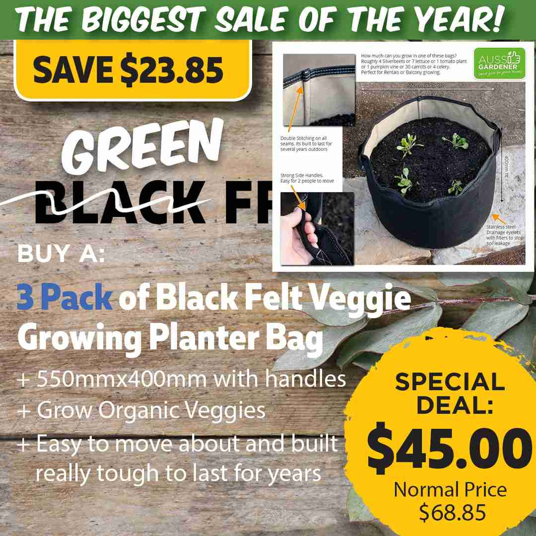 Green Friday Super Deal $68.85 value for just $45 - The biggest sale of the year.