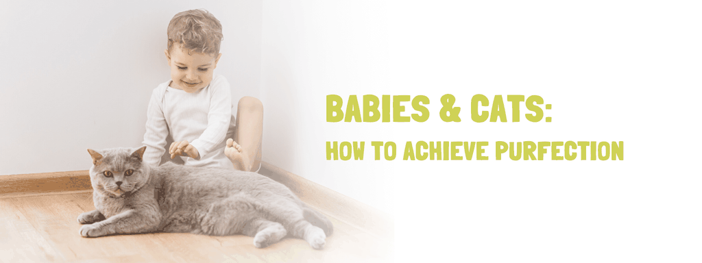 Babies and cats - How to get cat and baby to get along Banner