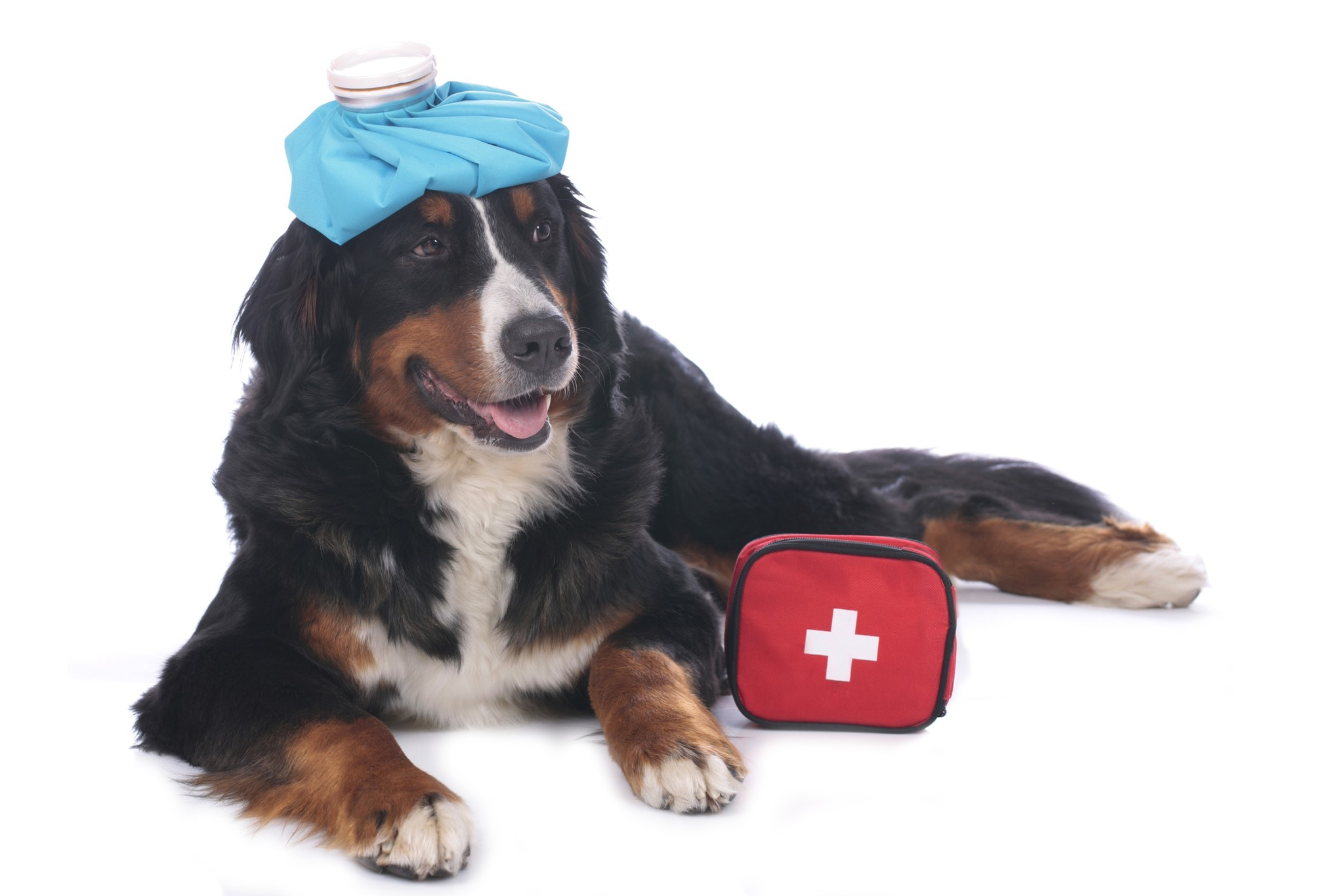 Canine Epilepsy: Cold Packs Can Help Dogs with Seizures