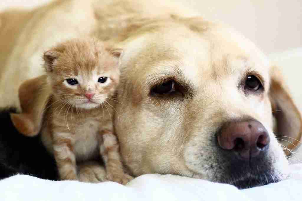 How to Introduce a Cat to a Dog - Blog Cover