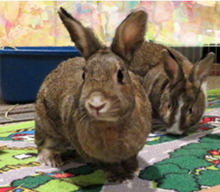 rescue rabbits