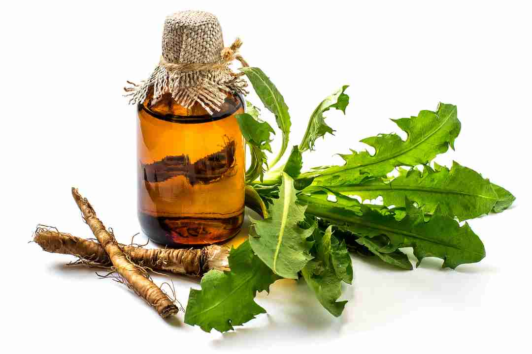 Roots and leaves of dandelion for liver