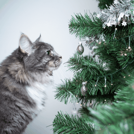 holiday pet safety - article image