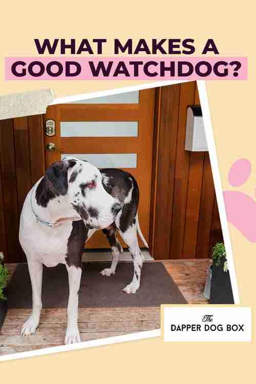 What Makes a Good Watchdog?