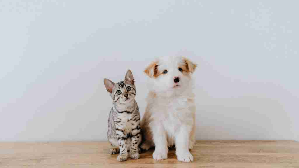 How to Introduce a Dog to a Cat - Blog Cover