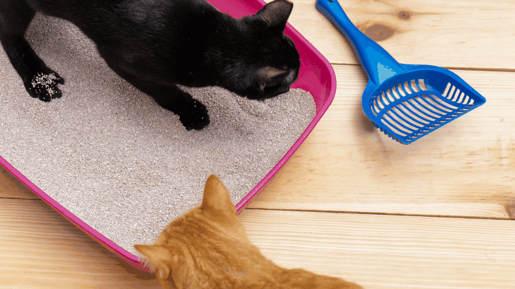 Toxoplasmosis in cats - blog image