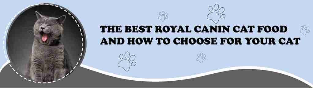 7 Healthy Advantages of Organic Cat Food Banner Design