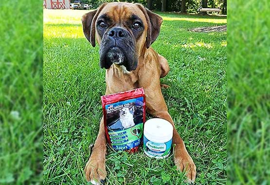 Our Dog Clyde - Salmon Oil Treats & Probiotic Powder