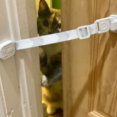 The Door Buddy - Blog - Indoor Cat Door Alternative