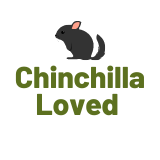 Chinchilla loved