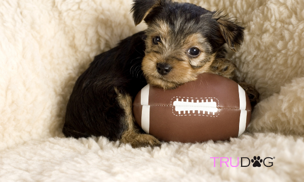 How To Watch The Puppy Bowl