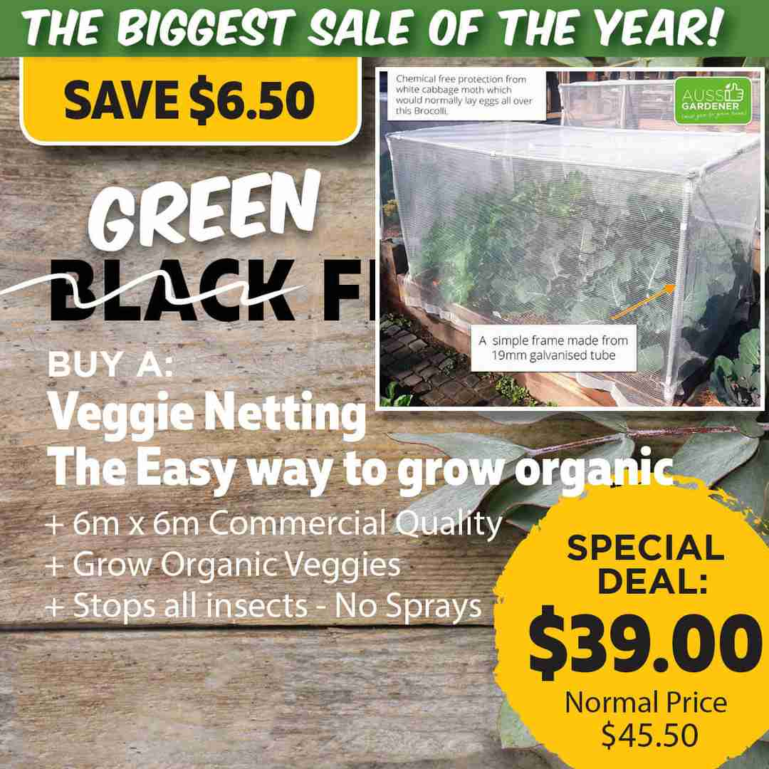 Green Friday Super Deal $45 value for just $39 - The biggest sale of the year.