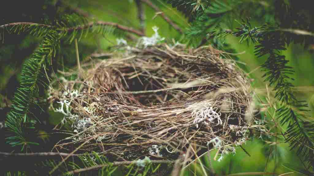 Comment trouver le nid des punaises de lit ?