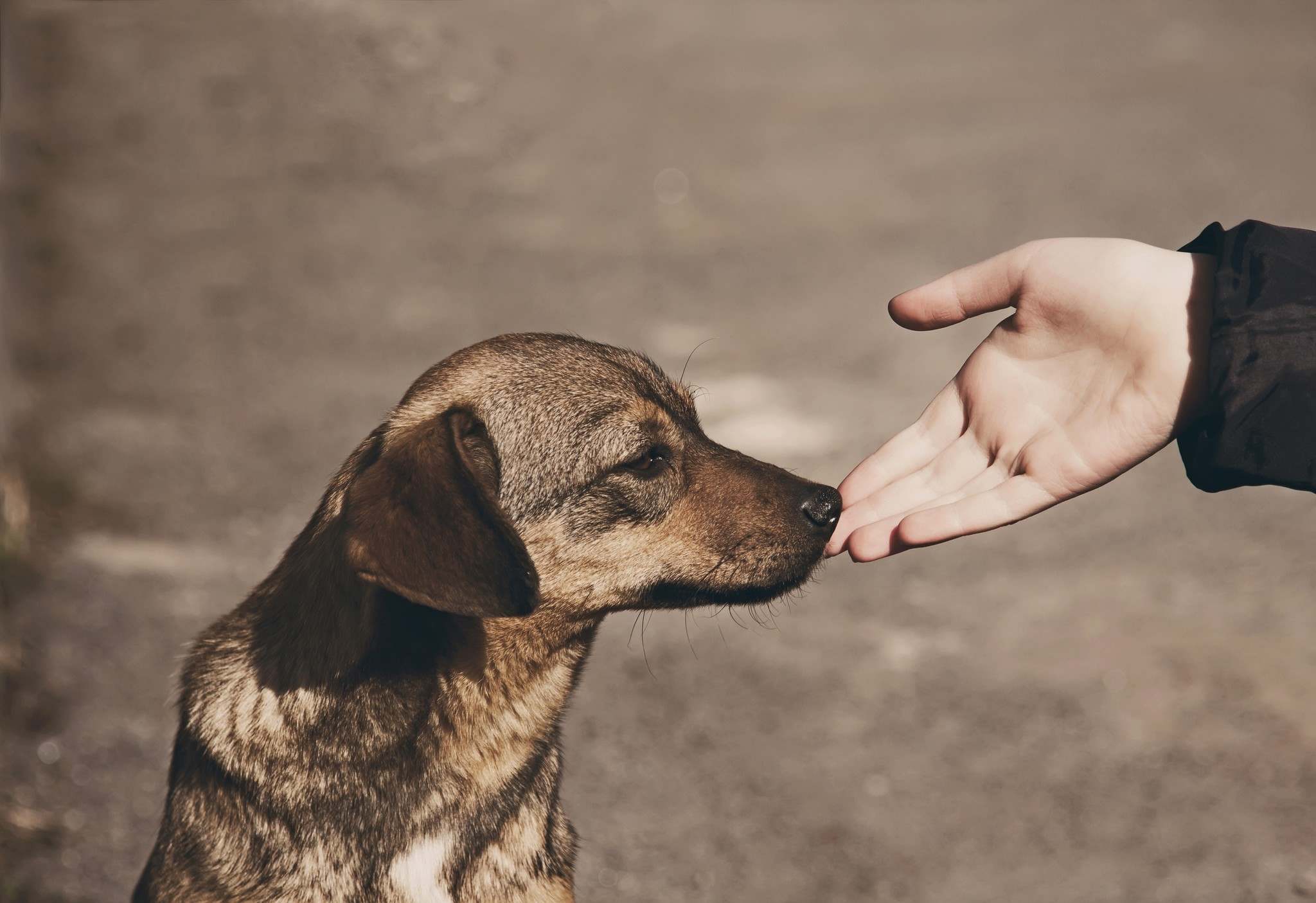 17 Ways to Give Back to the Pet Community in 2020