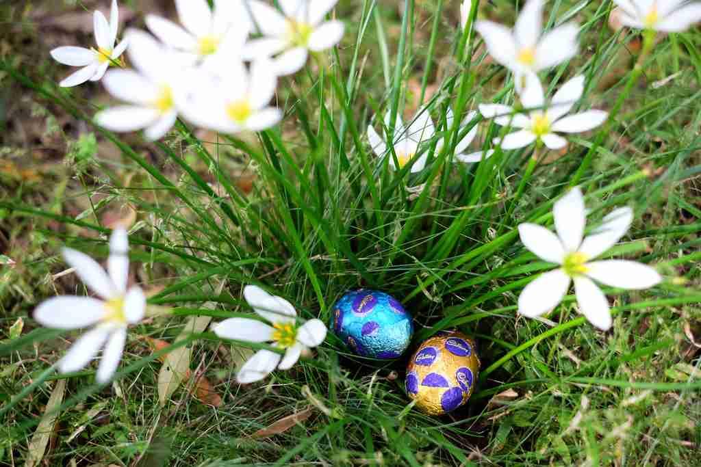 Easter Egg Hunt in the garden - in white Autumn Crocus