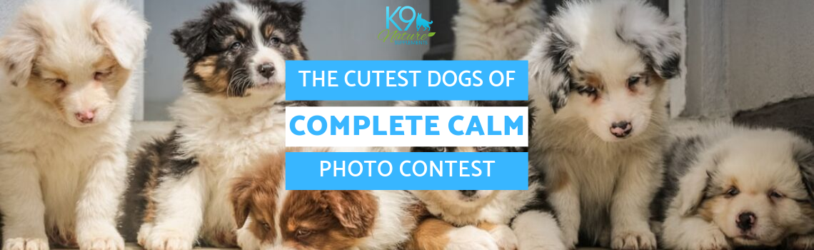 cutest dog_complete calm contest
