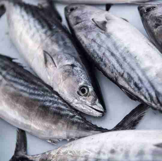 Oily fish are a great food source of Vitamin D