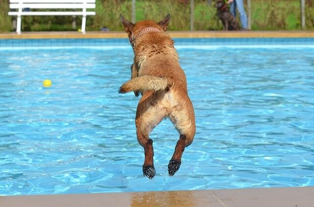 Dog summer safety tips - How to keep your dog safe near a pool