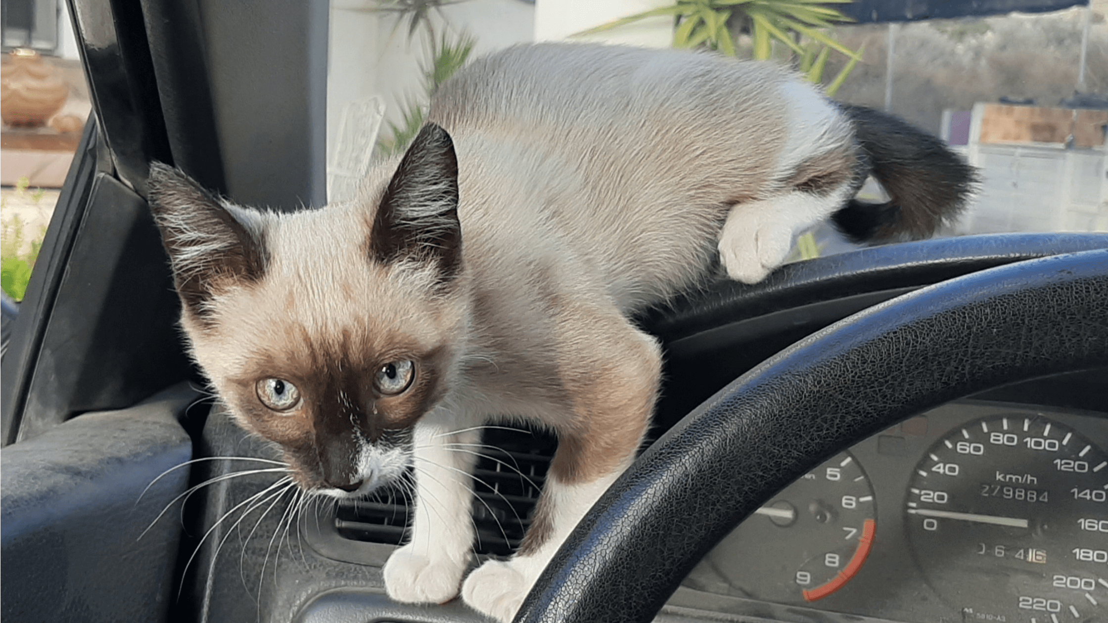 traveling with your cat - blog image