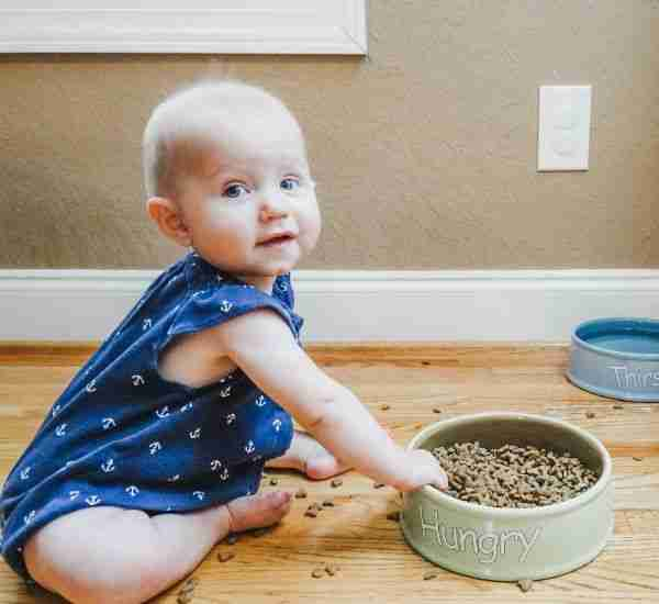 keep baby out of cat food