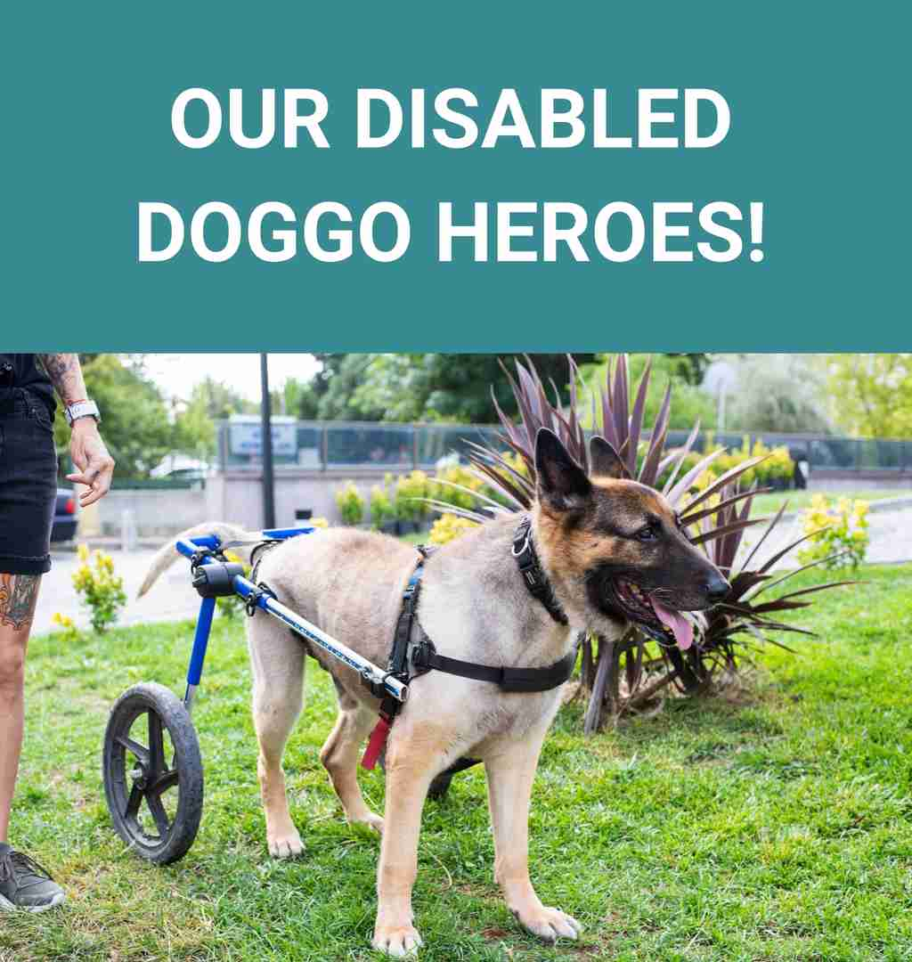 Our disabled doggo heroes!