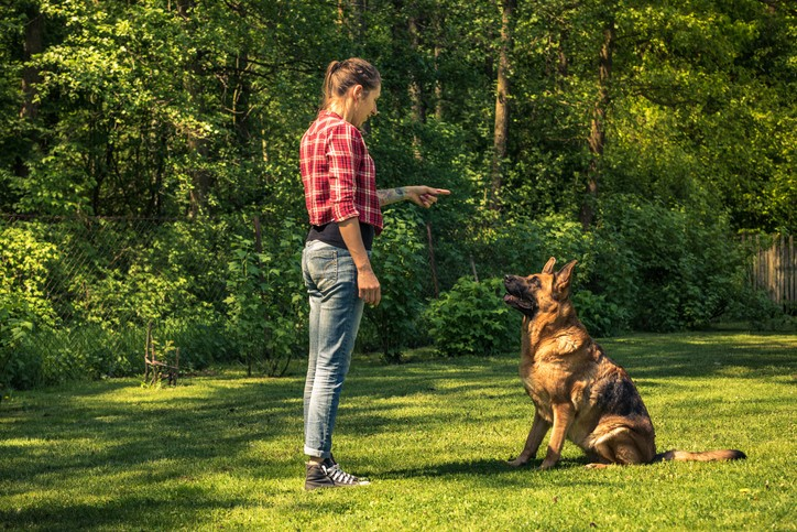 Dog Training Methods: Which Is The Right One For Your Dog?