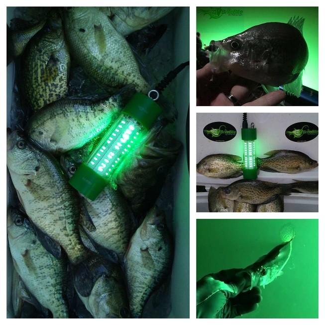 night fishing crappie lights
