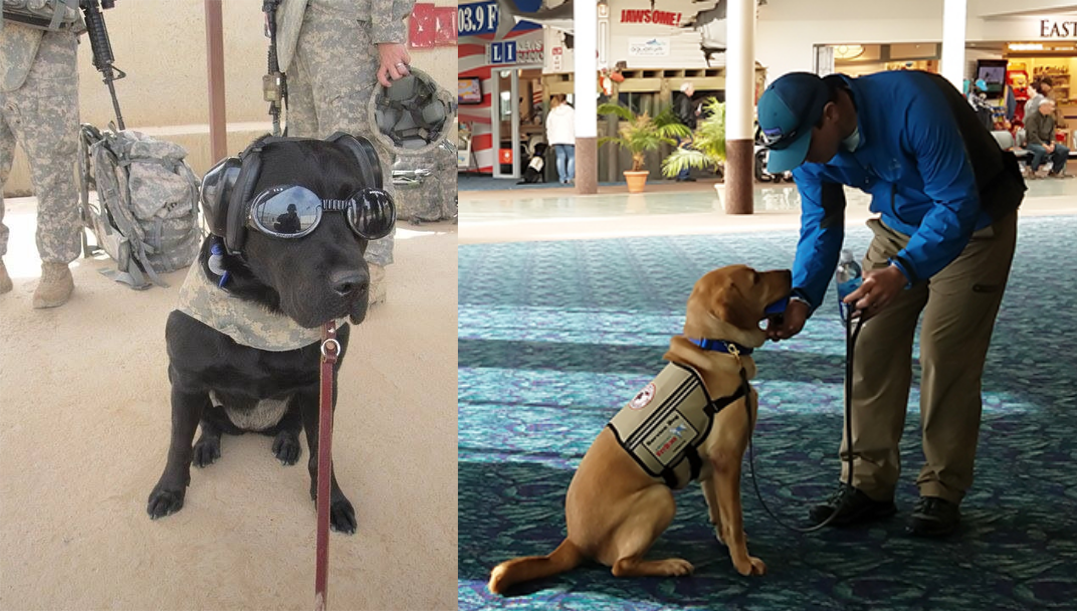December 2018 Charity Spotlight: America's VetDogs