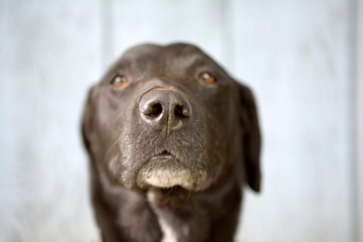 5 Reasons Senior Dogs Rock & Ways to Keep Them Comfortable as They Age
