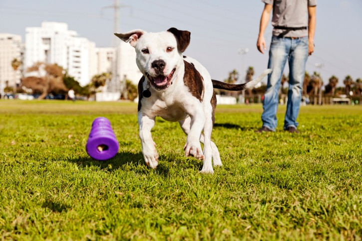 3 Great Games to Play With Your Dog