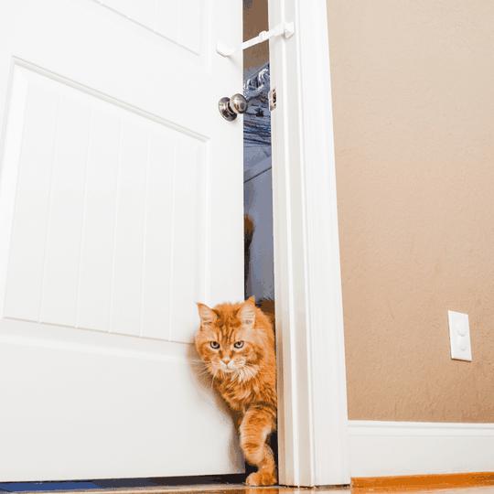 adjustable door strap for cat