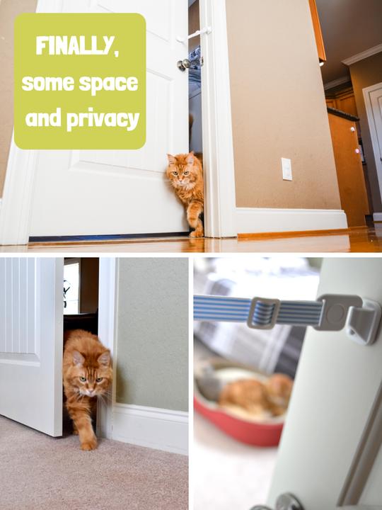 cat door latch
