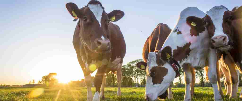 Sustainably Sourced Grass-Fed Whey Protein Isolate and Colostrum