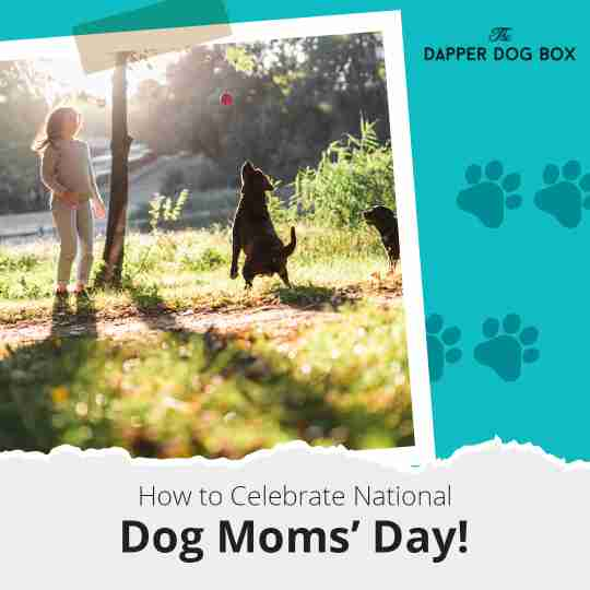 How to Celebrate National Dog Moms' Day