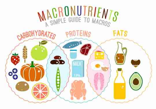 3 Essential Macronutrients