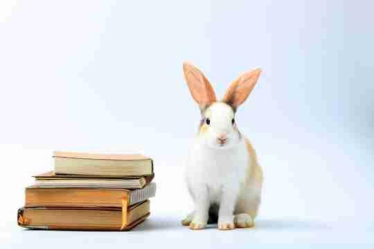 rabbit with books
