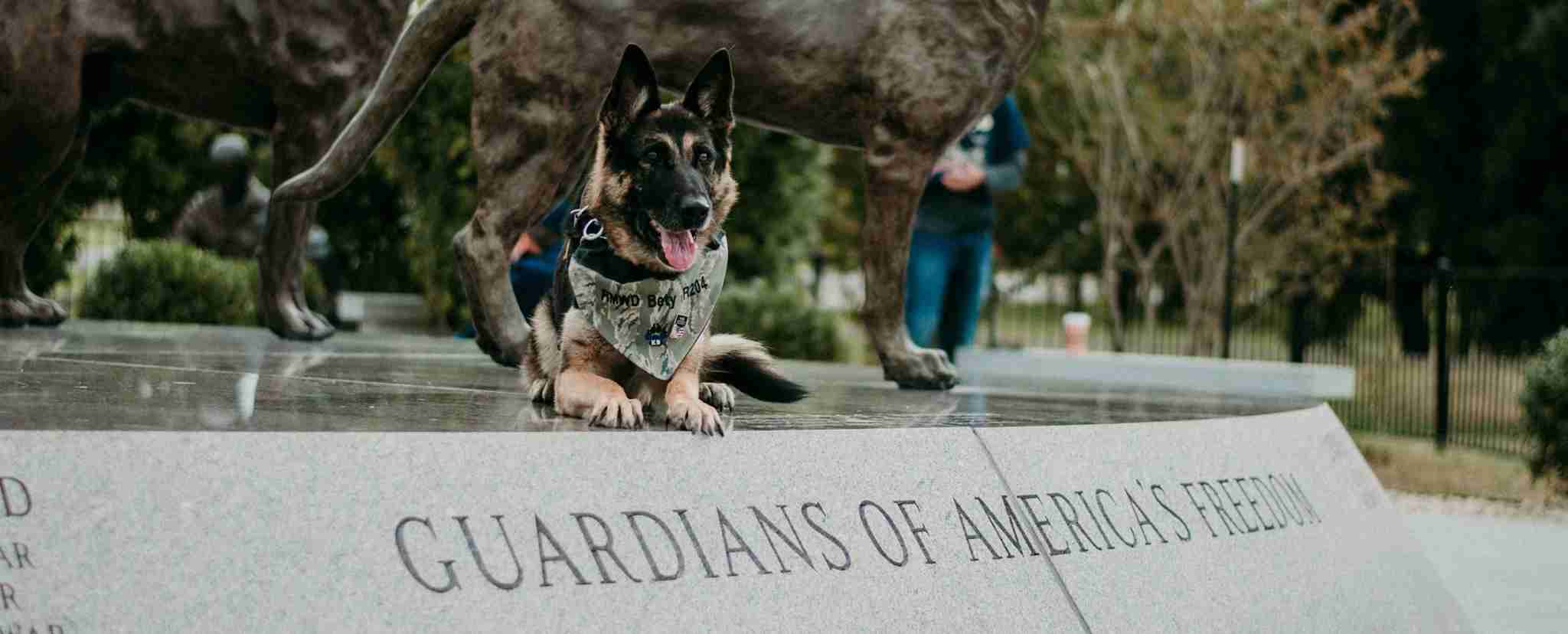 Working Dog Guardian of America's Freedom