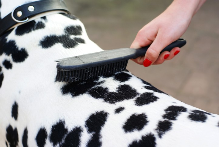 Why and How You Should Take Care of Your Dog's Skin & Coat