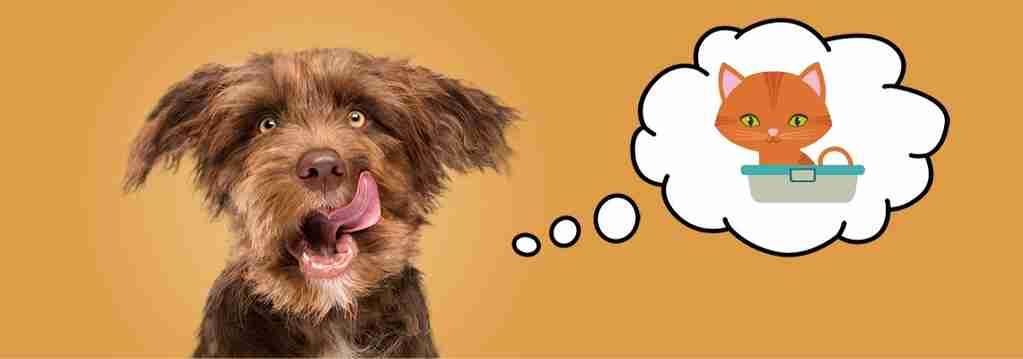 Door Buddy - why do dogs eat cat poop